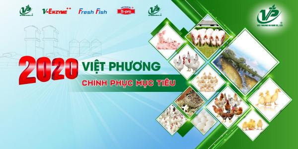 Việt phương -bia